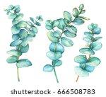 set of silver dollar eucalyptus ... | Shutterstock . vector #666508783