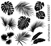 silhouettes of tropical leaves. ... | Shutterstock .eps vector #666555007