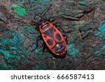 Red Soldier Bug On The Trunk O...
