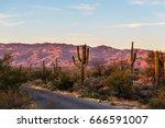 saguaro national park | Shutterstock . vector #666591007