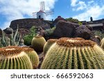 tropical cactus garden in... | Shutterstock . vector #666592063