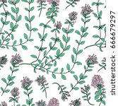 thyme branch hand drawn vector... | Shutterstock .eps vector #666679297