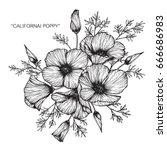 bouquet of california poppy... | Shutterstock .eps vector #666686983