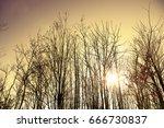 leaf falling tree | Shutterstock . vector #666730837