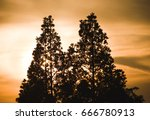 Two Trees Silhouette In The...