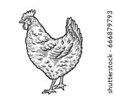 chicken  hen bird  poultry ... | Shutterstock .eps vector #666879793