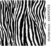 zebra texture skin grunge... | Shutterstock .eps vector #666909253