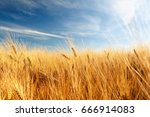 wheat field and blue sky with... | Shutterstock . vector #666914083