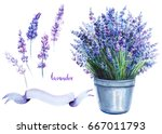 lavender in a pot  flowers and... | Shutterstock . vector #667011793