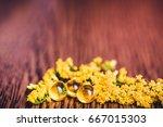 medicine herb. herbal pills...   Shutterstock . vector #667015303
