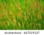 weeds waving in the wind | Shutterstock . vector #667019137