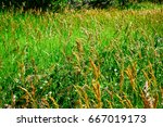 weeds waving in the wind | Shutterstock . vector #667019173