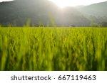 Small Gazebo In The Rice Field...