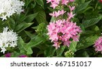 colorful flowers bloom in the...   Shutterstock . vector #667151017