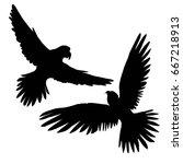 silhouette parrot  vector ... | Shutterstock .eps vector #667218913