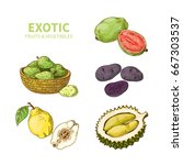 exotic fruits and vegetables.... | Shutterstock .eps vector #667303537