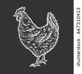 chicken  hen bird  poultry ... | Shutterstock .eps vector #667310413