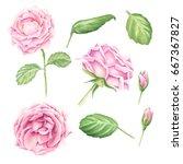 hand drawn watercolor pastel... | Shutterstock . vector #667367827