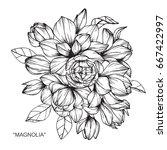 bouquet of magnolia flowers...   Shutterstock .eps vector #667422997