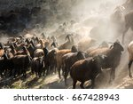 Dark Shadows As A Large Herd O...