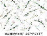flowers composition. pattern... | Shutterstock . vector #667441657