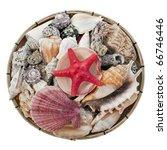 Seashells Isolated On White...