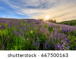sunset on a hill covered with... | Shutterstock . vector #667500163