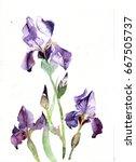 Three Purple Irises....