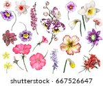 tropical collection with plants ... | Shutterstock . vector #667526647