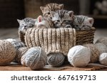 group of small striped kittens... | Shutterstock . vector #667619713