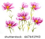 Pink Cosmos Flowers. Oil...