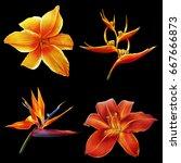 Tropical Orange Flowers On...