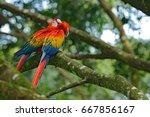 wildlife love scene from tropic ... | Shutterstock . vector #667856167