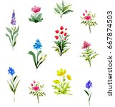 watercolor illustration with... | Shutterstock . vector #667874503