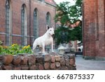 english bull terrier dog posing ... | Shutterstock . vector #667875337