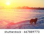 Dog Walking In The Snowy Field...
