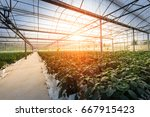 Greenhouse greenhouse soilless...