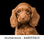 Stock photo cute puppy 668055823