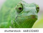 a close up of an adult female... | Shutterstock . vector #668132683