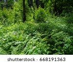green grass  shrubs and trees... | Shutterstock . vector #668191363