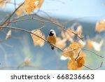parson's finch   Shutterstock . vector #668236663