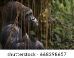 gorilla sitting quietly | Shutterstock . vector #668398657