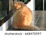 persian cat at the door with... | Shutterstock . vector #668470597