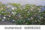 waste and water hyacinth in the ...   Shutterstock . vector #668482363