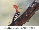 close up  beautiful bird ... | Shutterstock . vector #668513923