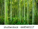 bamboo forest of arashiyama... | Shutterstock . vector #668560117
