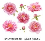 pink peonies isolated on white... | Shutterstock . vector #668578657