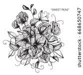 bouquet of sweet peas flowers... | Shutterstock .eps vector #668650747