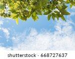 trees frame over blue sky on... | Shutterstock . vector #668727637