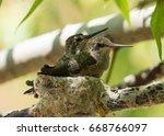 Twenty Six Day Old Hummingbird...